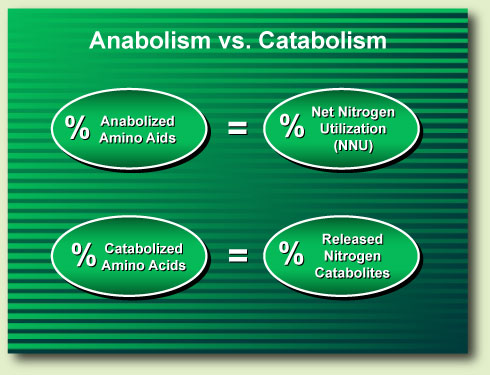 Chart 1. The percentage of a protein's anabolized amino acids is